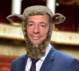 terlier mouton